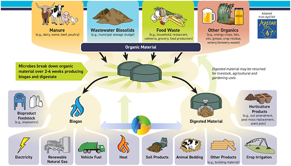biogas from different sources creates renewable energy through renewable natural gas (rng)